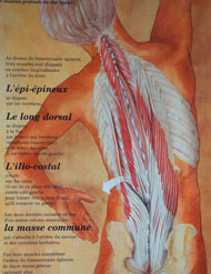 posture le long dorsal